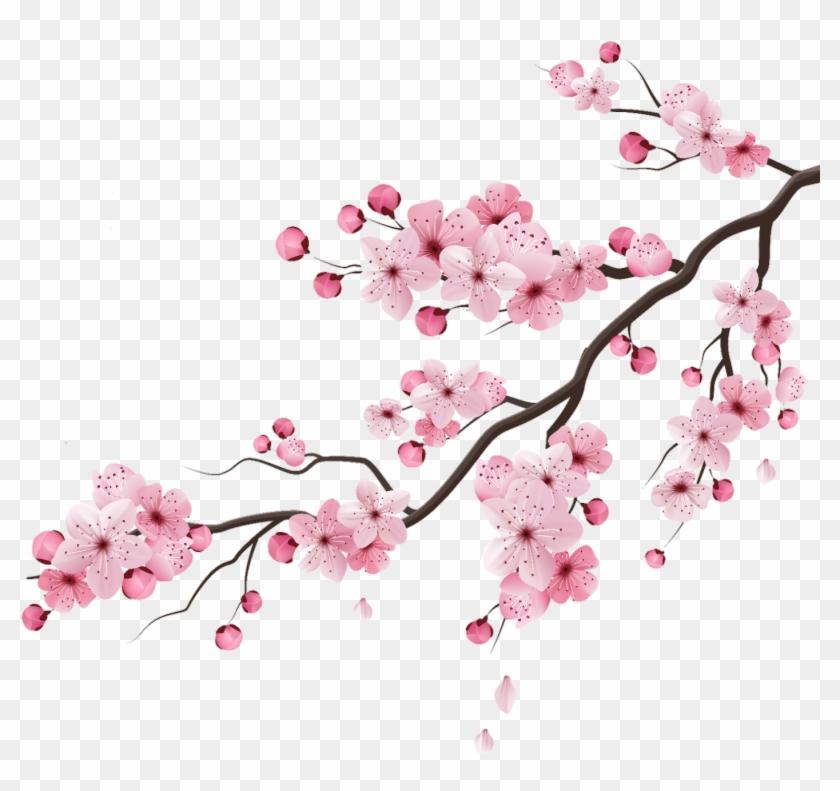 Cherry Cherryblossom Blossom Peachflower Peach Flower - Cherry Blossom Branches Vector Clipart #2531144