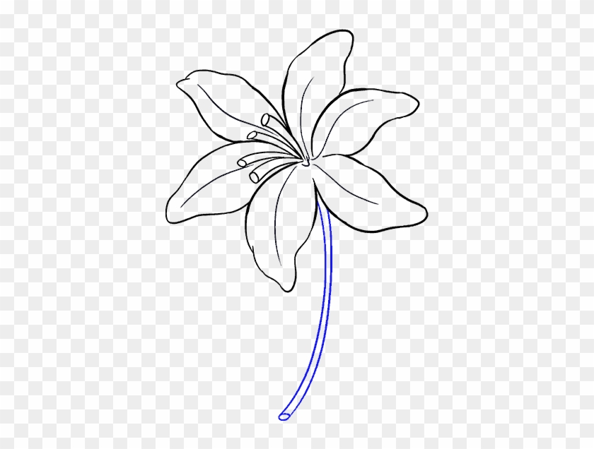 Drawing The Flower Lily Flower Drawing Easy Clipart 2537948 Pikpng
