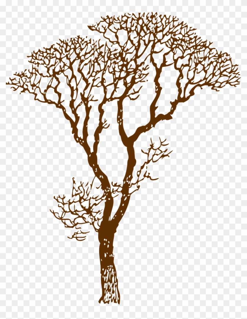 How To Draw A Tree, Stencil - Jungle Tree Clipart Black And White - Png Download #2545237