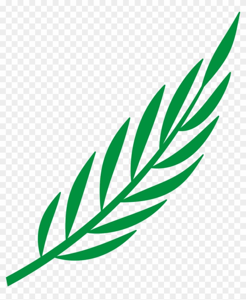 Branch Laurel Leaf Leafy Leaves Png Image - Laurel Leaves Png Vector Clipart@pikpng.com