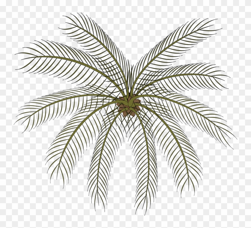 Computer Icons Date Palm Drawing Black And White Cartoon - Small Palms Top View Png Clipart #2555756