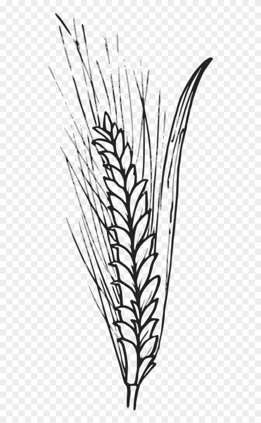 Cereals Grain Corn Wheat Barley Png Image - Outline Of Wheat Clipart #2569299