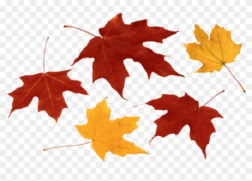 Free Png Download Fall Leaves Clipart Png Photo Png - Transparent Fall Leaves Png #263306