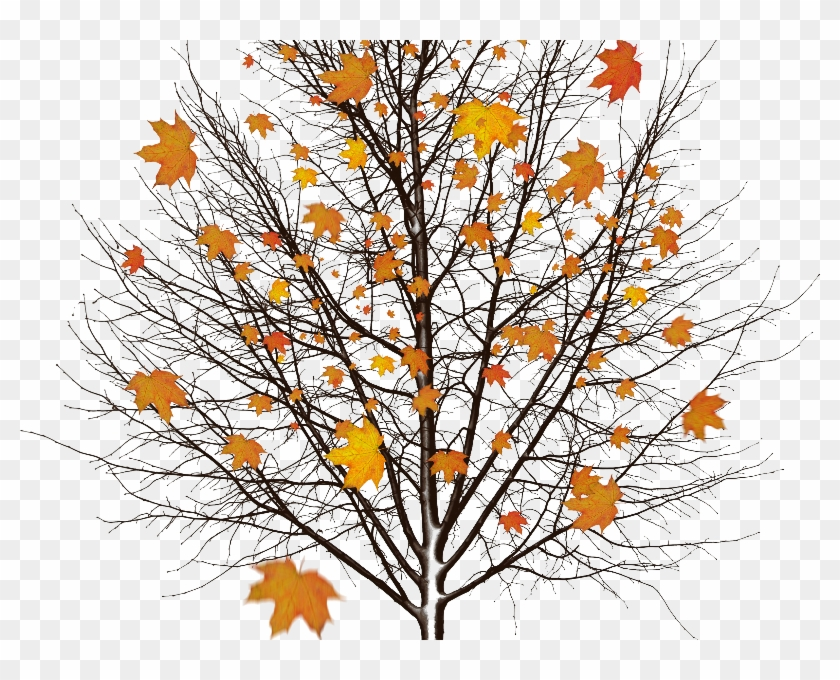 Autumn Tree With Leaves Isolated Object Png - Dead Tree Without Background Clipart #263614