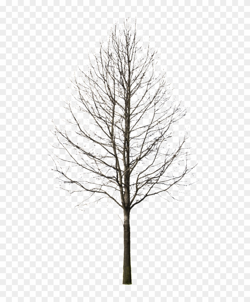 Tree Drawing At Getdrawings - Tree Cut Out Winter Clipart #2603977