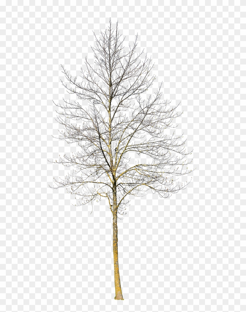 Deciduous Tree Winter Iii - Winter Tree Cut Out Clipart #2604016