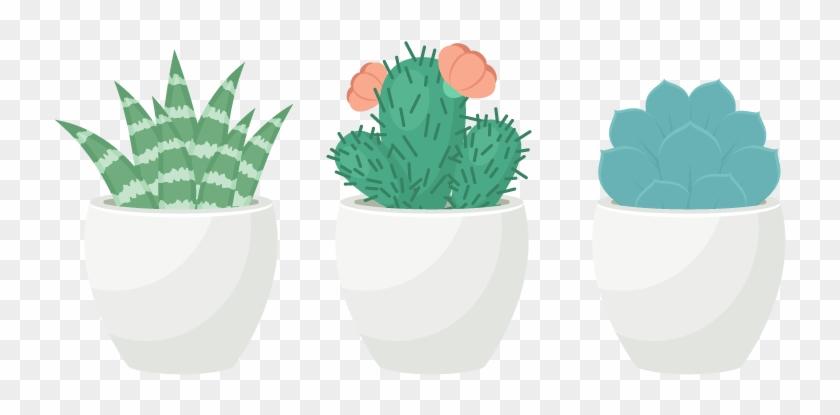 Cactus Vector Succulent - Succulent Plant Clipart #2607564