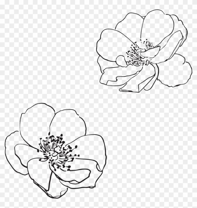 Rose Wild Flower Flowers Png Image - Vector Flower Outline Png Clipart@pikpng.com