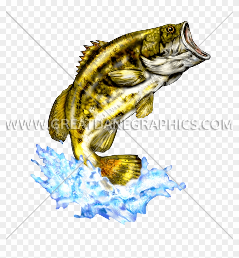 Bass Drawing Large - Largemouth Bass Clipart@pikpng.com