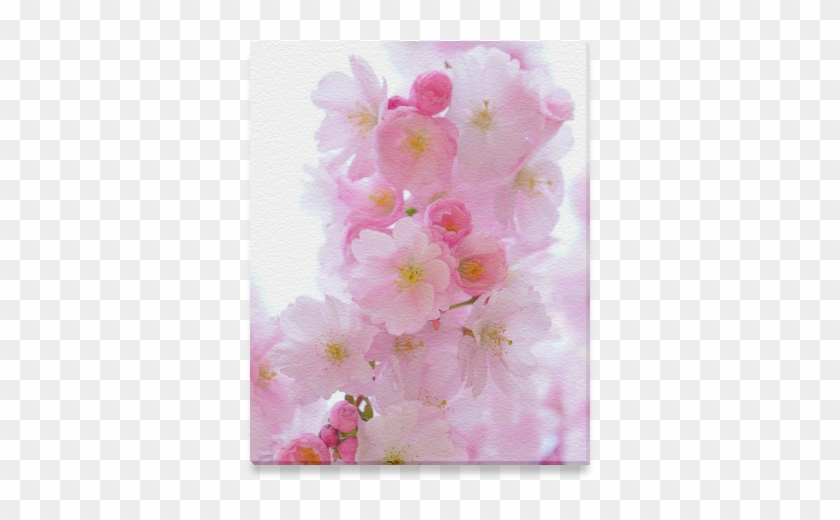 Beautiful Pink Japanese Cherry Tree Blossom Canvas - Cherry Blossom Clipart #2674217