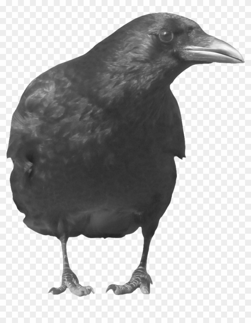Crows Png - Black Crow Transparent Background Clipart #2694905