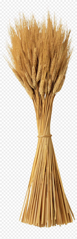 Wheat Png - Колосья Пшеницы На Прозрачном Фоне Clipart #2695621