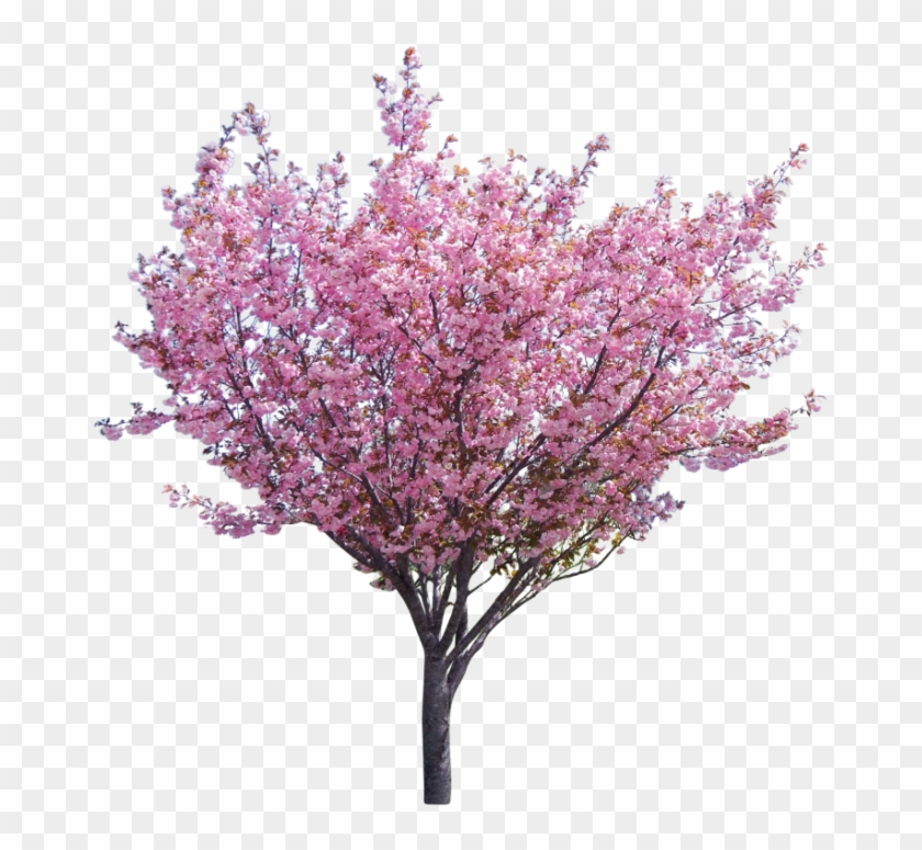 Tree Surgery & Consultancy Company Based In The North - Eastern Redbud Png Clipart #2703400