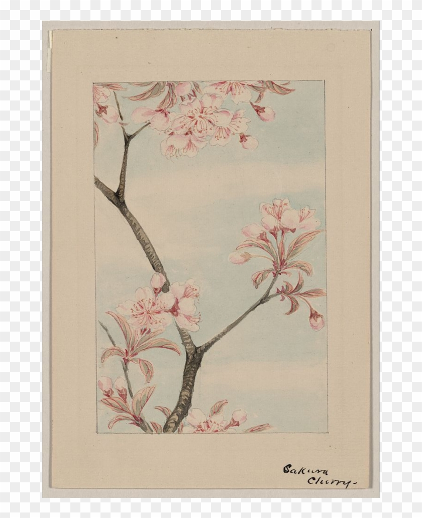 0 Replies 0 Retweets 0 Likes - Japanese Woodblock Cherry Blossom Clipart #2717492
