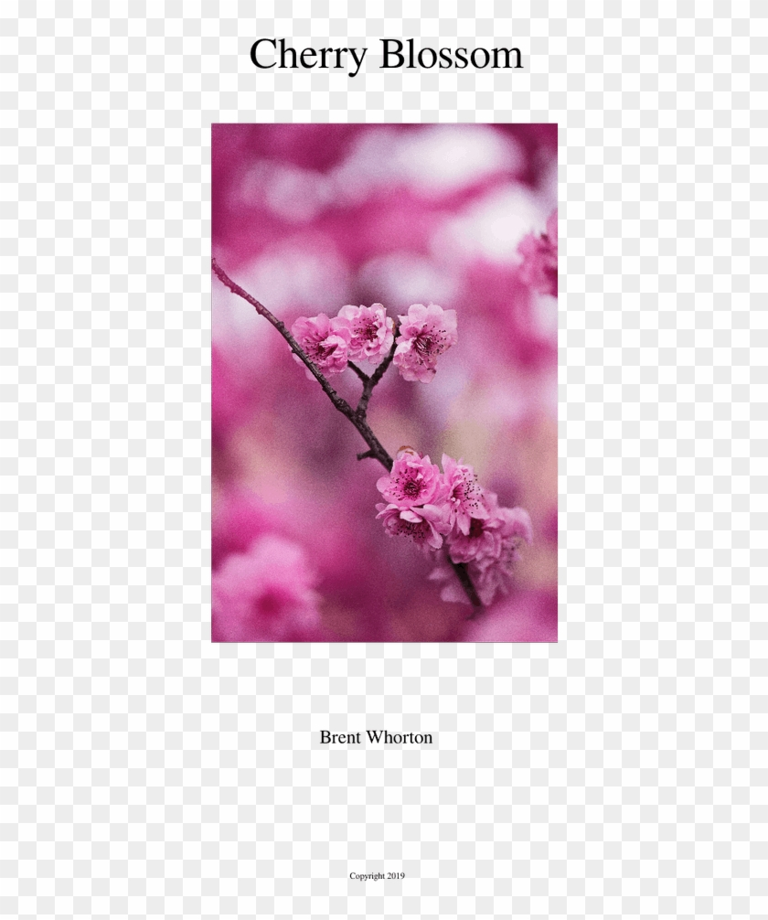 Cherry Blossom Sheet Music For Flute, Clarinet, Oboe, - Cherry Blossom Clipart #2720395