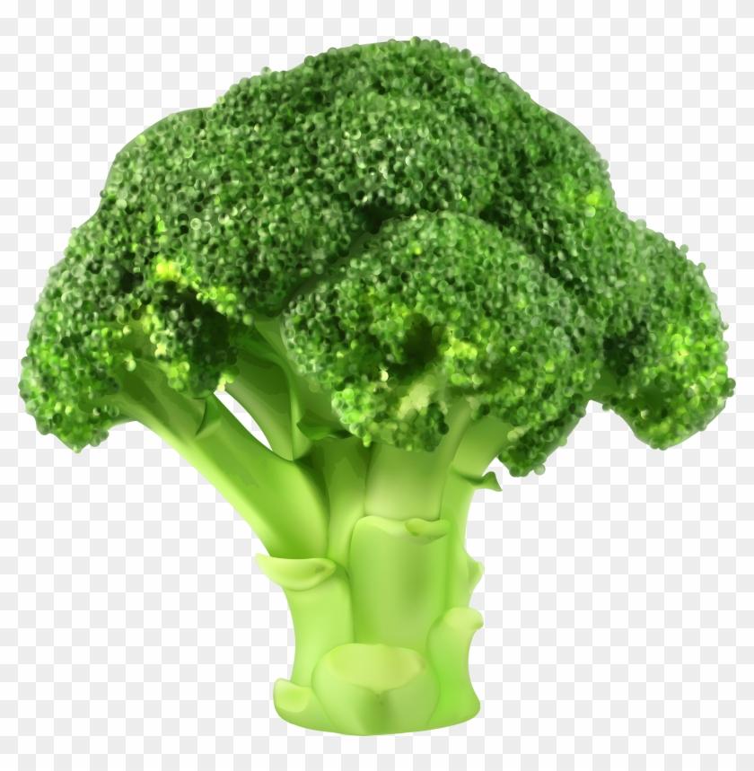 Broccoli Png Clipart - Broccoli Vector Png Transparent Png #282884
