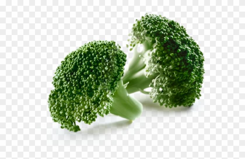 Broccoli Clipart #283905