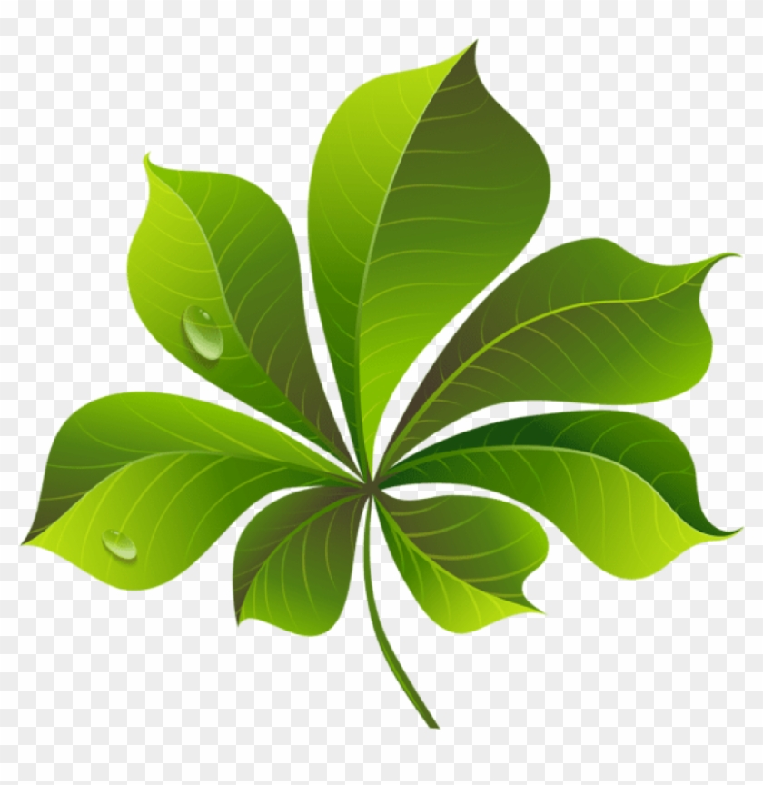 Fall Green Leaf Png - Leaf Png Clip Art, Transparent Png #285778
