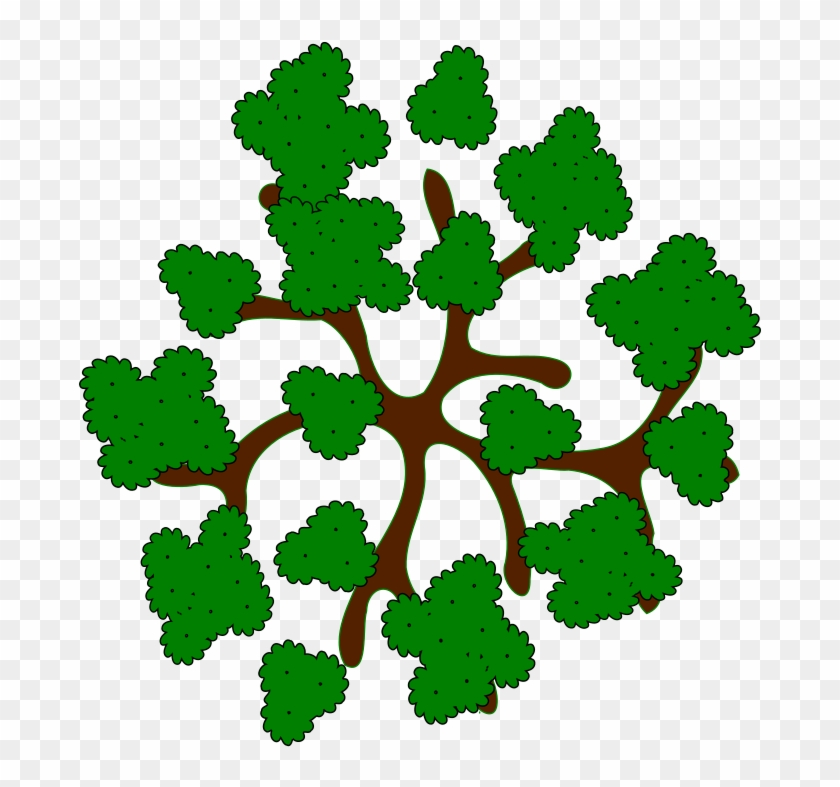 28 Collection Of Trees Clipart Top View Tree Top View Cartoon Png Download 293307 Pikpng 1024 x 593 png 356 кб. trees clipart top view tree top