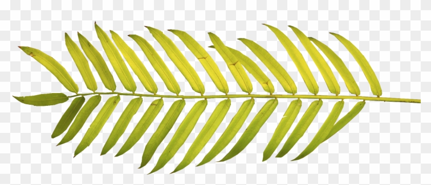 Leaves Tropical Png