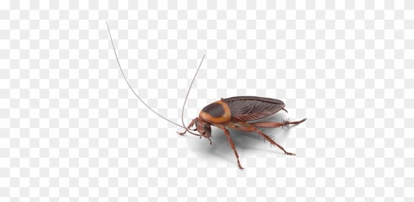Roach Png Transparent Image - Cockroach Clipart #2918159