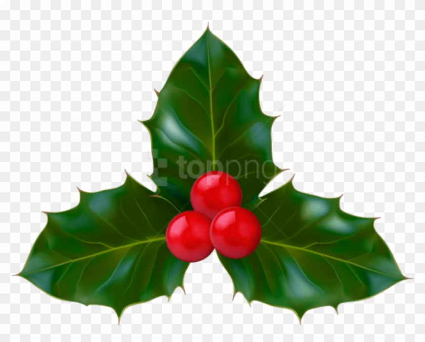 Free Png Christmas Holly Png - American Holly Clipart #2920513