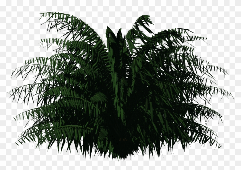 Cycas Palm - Plants For Photoshop Clipart #30864