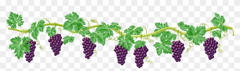 Kyoho Grape Vine Clip Art - Grape Vines Clip Art - Png Download #31946