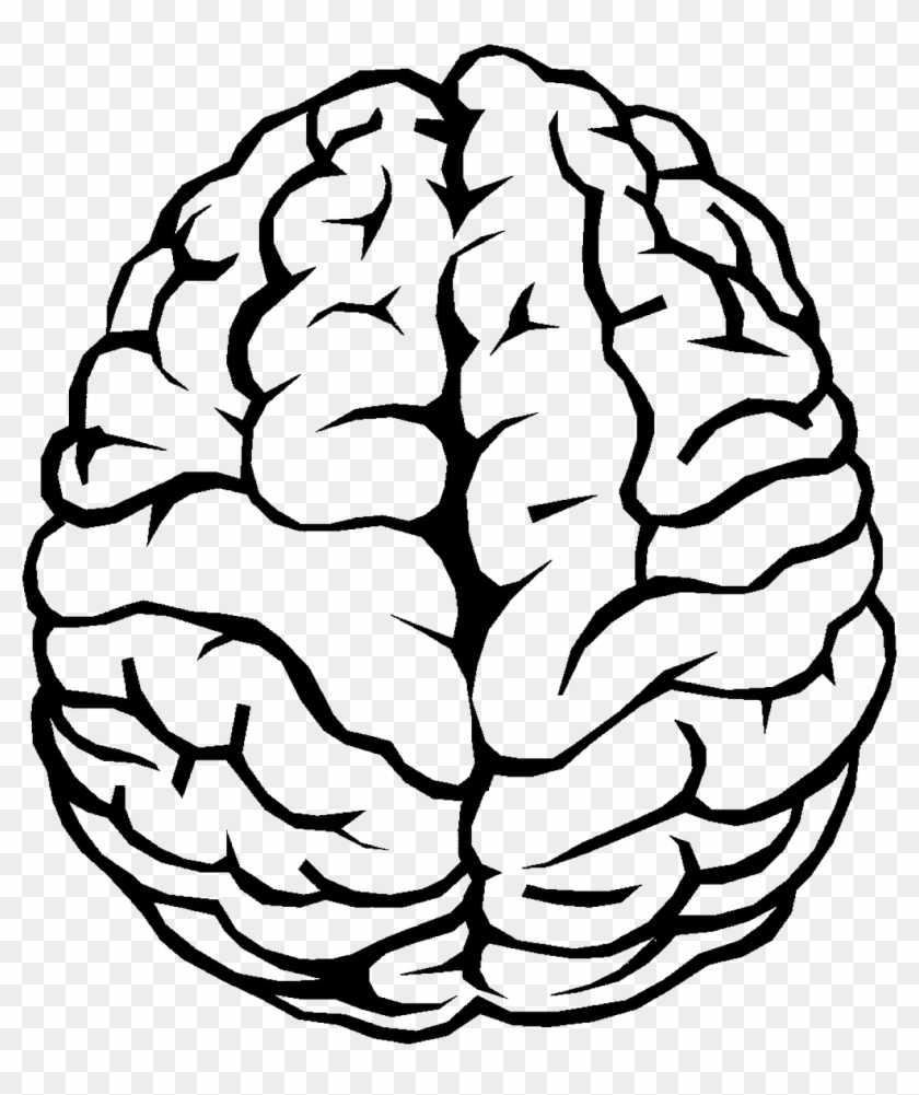 Brain Outline Png Image - Simple Brain Drawing Clipart@pikpng.com