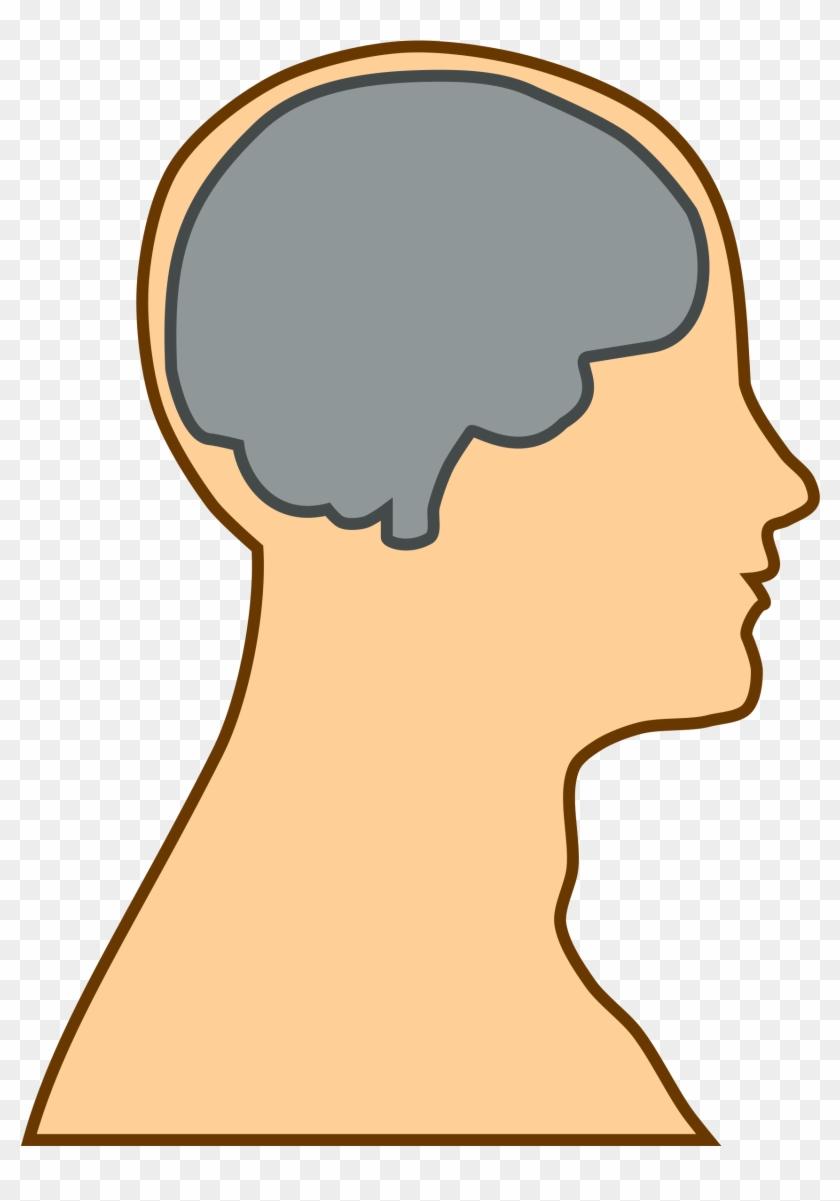Free Simple Brain Silhouette Clip Art U0026middot - Thalamus And Frontal Lobe - Png Download #39093