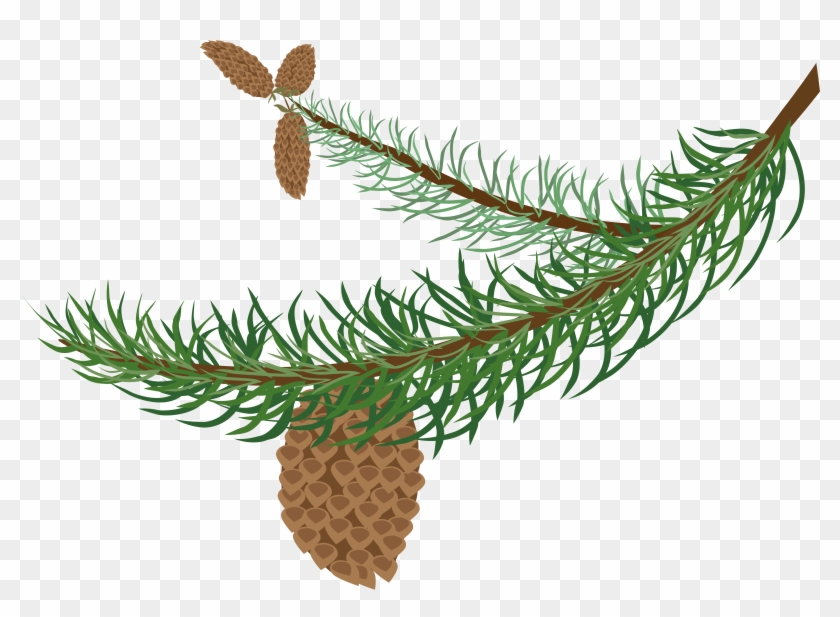 Fir Clipart Needle - Winter Tree Branch Clipart - Png Download #300690