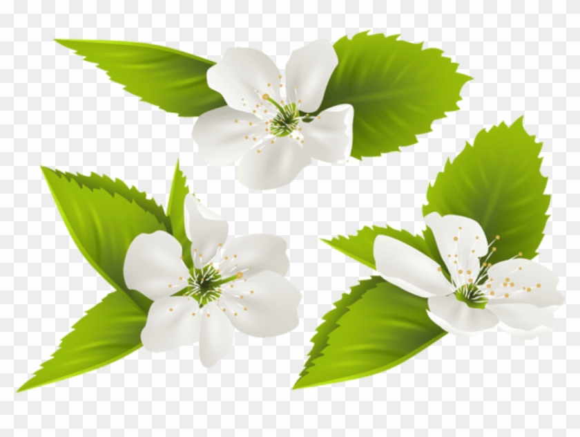 Free Png Spring Tree Flowers Png Images Transparent - Jasmine Flower Clipart Transparent #305306