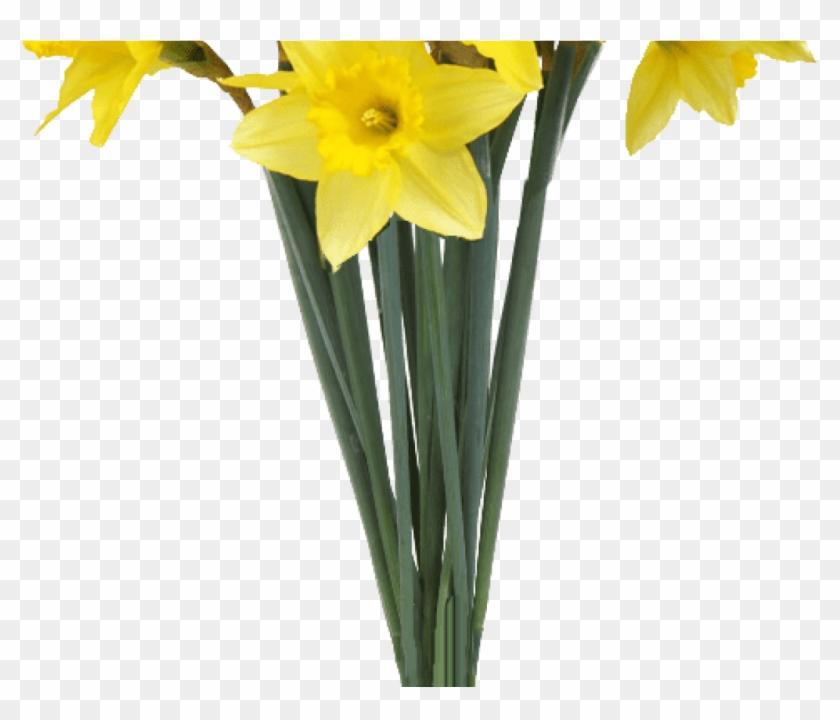 Spring Daffodils Transparent Background Flower Image Clipart #306159