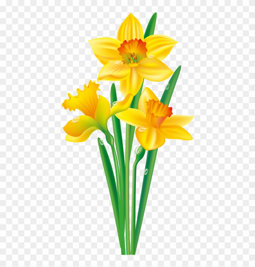 August Flower Png Photo - Clip Art Daffodil Flower Transparent Png #306556
