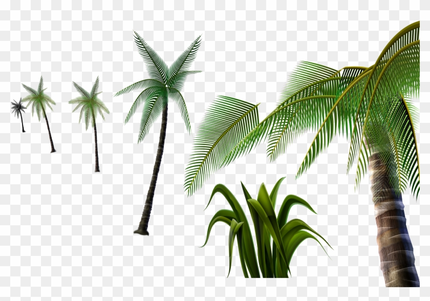 3d Palm Tree Png - Attalea Speciosa Clipart #3022299