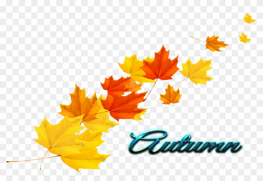 Transparent Autumn Leaves - Transparent Autumn Leaves Vector Clipart #3037309