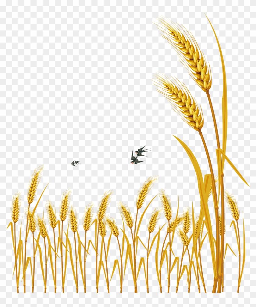 Hand Painted Cartoon - Wheat Vector Clipart #3072462