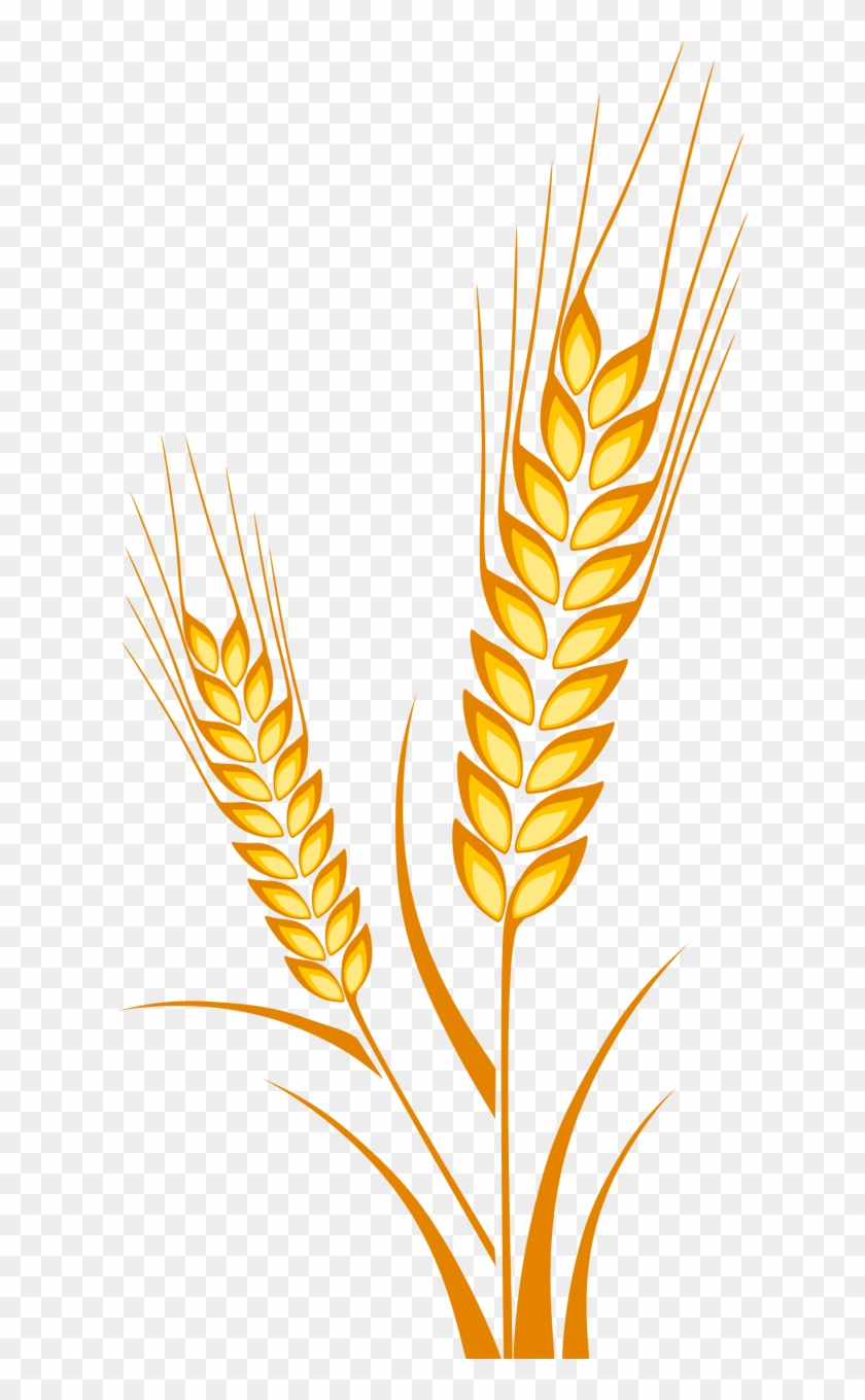 Ear Cereal Maize - Wheat Drawing Clipart #3072541