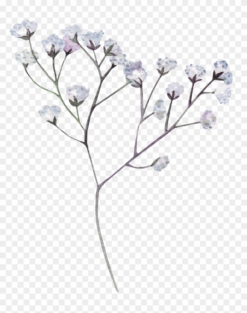 White Flower Png Transparent Dried Flowers Png Clipart 311544 Pikpng