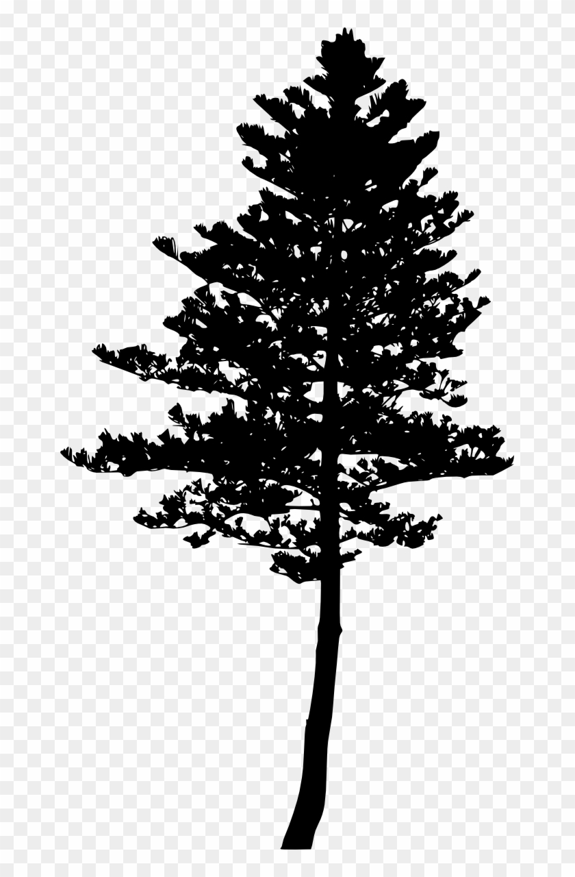 Free Download Pine Tree Png Tree Silhouette Clipart 328877 Pikpng