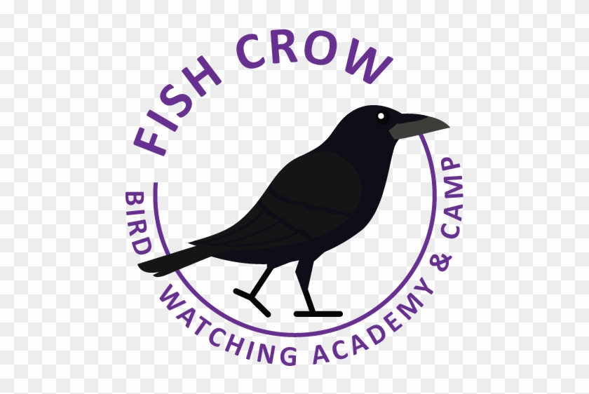 Fish Crow - American Crow Clipart #3257607