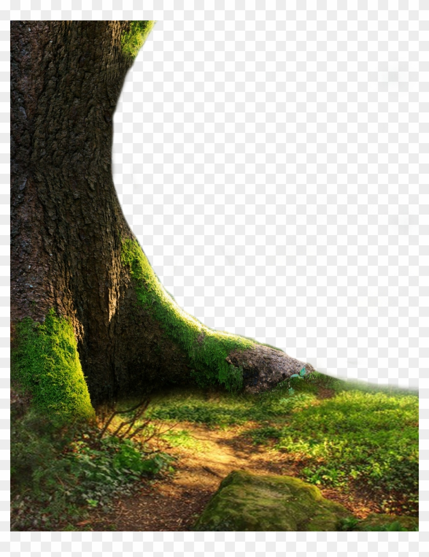 Nature Png Hd - Png Tree Full Hd Clipart #3294971