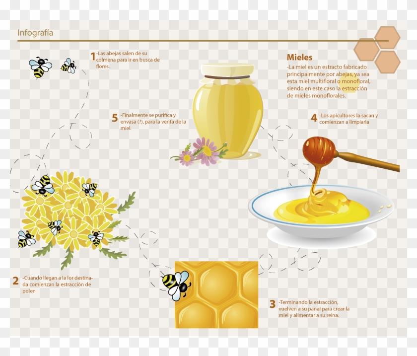 De Dónde Viene La Miel - Honey Vector Clipart #3298601