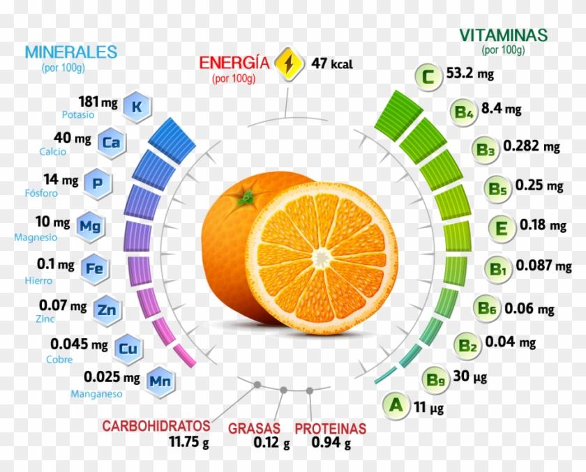 Conoce Lo Que Nos Aporta Un Zumo Recién Exprimido - Vitaminas Y Minerales De La Naranja Clipart #3300243