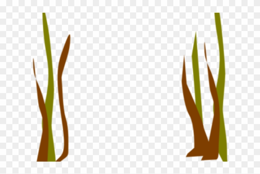Reed Clipart Reed Plant Png Download 3372636 Pikpng