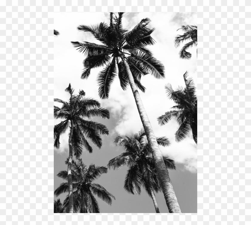 Palm Ii - Attalea Speciosa Clipart #3529984