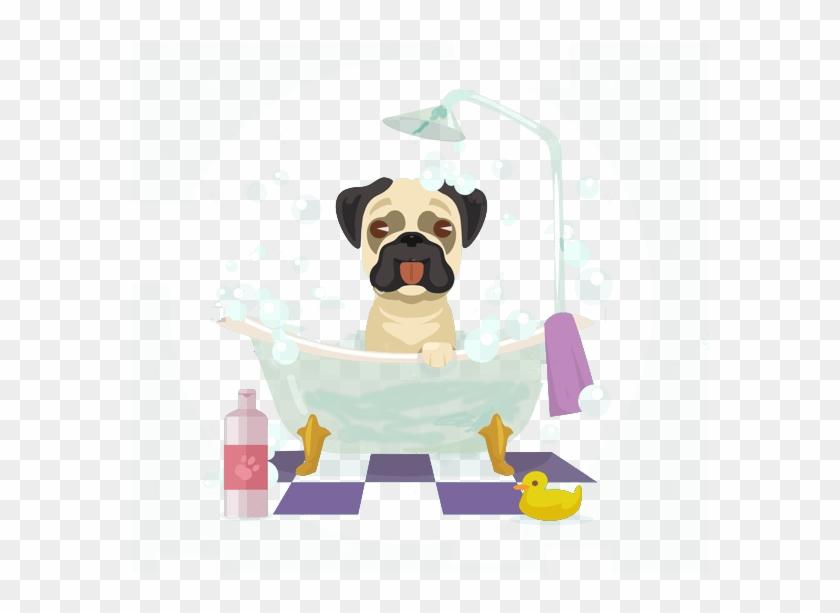 Dog Groomer - Pug Clipart #3552084