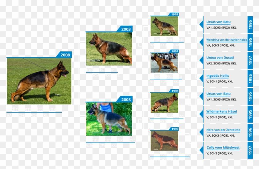 Stud Dog Va1 Odin Vom Mittelwest - Old German Shepherd Dog Clipart #3561746