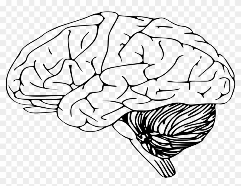 mind clipart brain outline brain clip art png download 364200 pikpng mind clipart brain outline brain clip