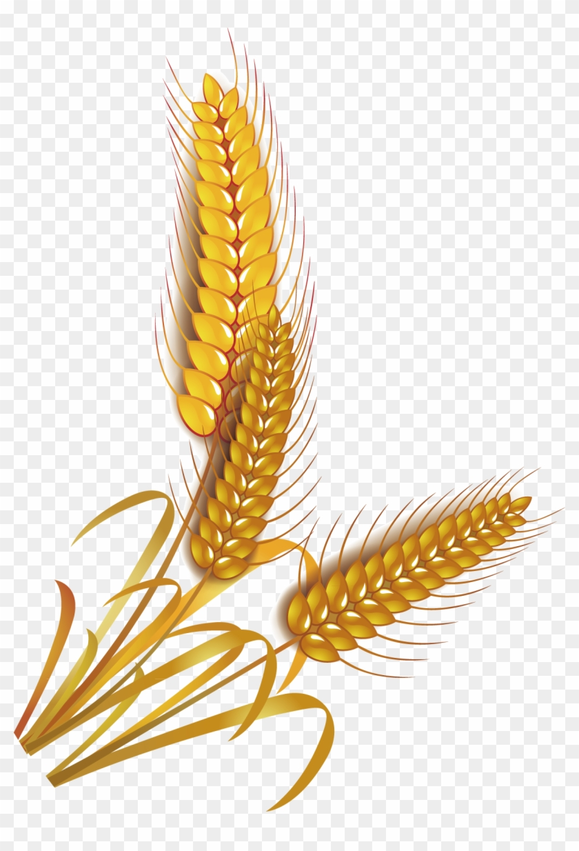 Wheat Rice Cereal Whole Grain Clip Art - Wheat Grains Vector Png Transparent Png #3639583